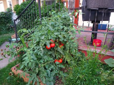 Ways to keep your garden going during the drought